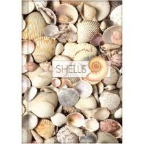 """Канцелярська книга """"Малюнки природи. Shells"""" А4, лінійка, 96 арк."""